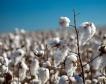 4 млн. лв. за памукопроизводителите
