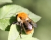 Какво убива пчелите (инфографика)