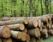 5000 дка горски култури ще залеси ЮЗДП