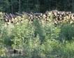 Храни и обезлесяване - на ръба на закона