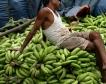Бананите, заплашени от заразна гъба